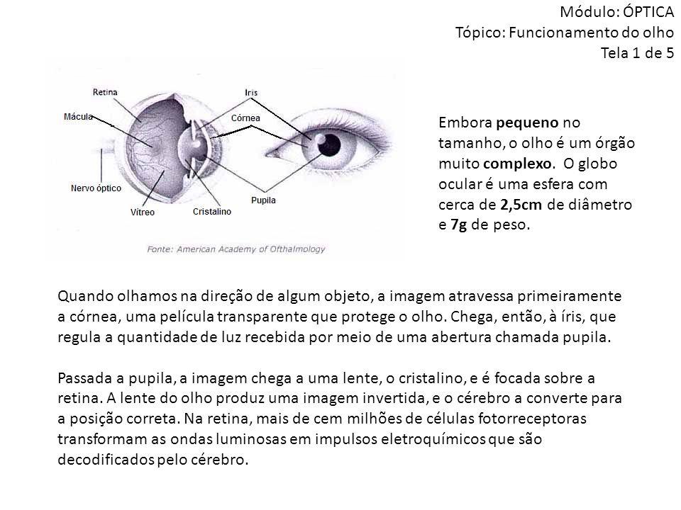 Módulo: ÓPTICA Tópico: Funcionamento do olho Tela 1 de 5