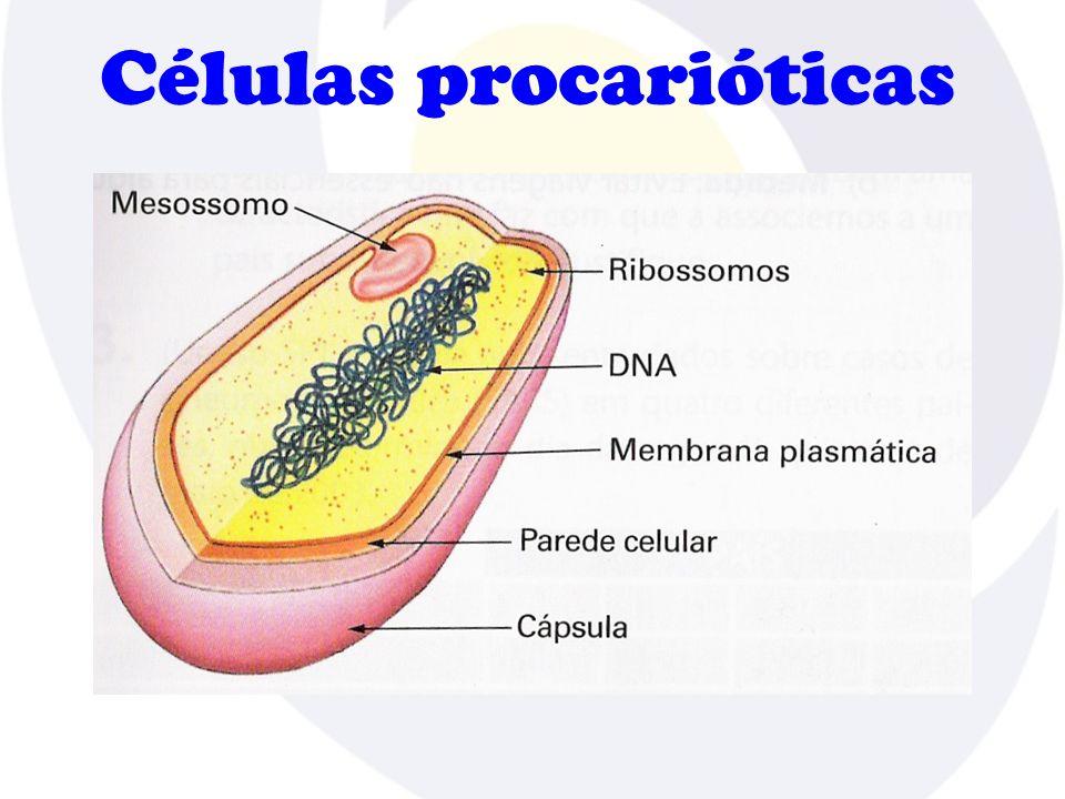 Células procarióticas