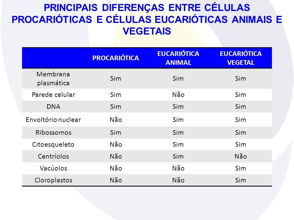 PRINCIPAIS DIFERENÇAS ENTRE CÉLULAS PROCARIÓTICAS E CÉLULAS EUCARIÓTICAS ANIMAIS E VEGETAIS