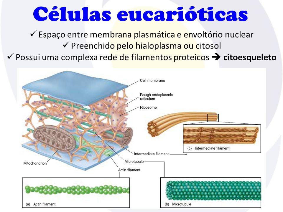 Células eucarióticas Espaço entre membrana plasmática e envoltório nuclear. Preenchido pelo hialoplasma ou citosol.
