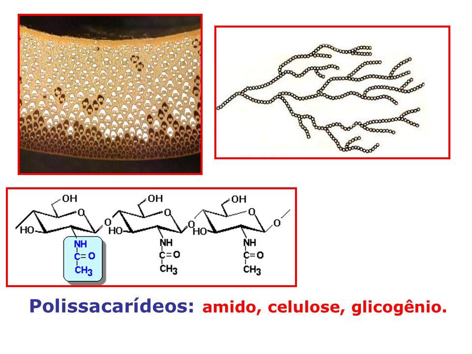 Polissacarídeos: amido, celulose, glicogênio.