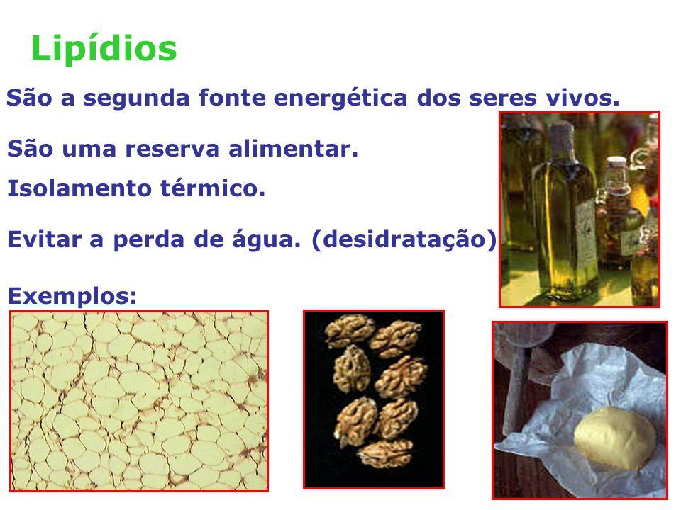 Lipídios São a segunda fonte energética dos seres vivos.