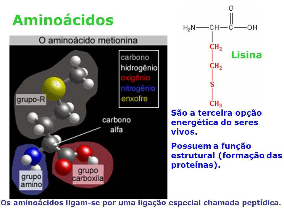 Aminoácidos Lisina São a terceira opção energética do seres vivos.