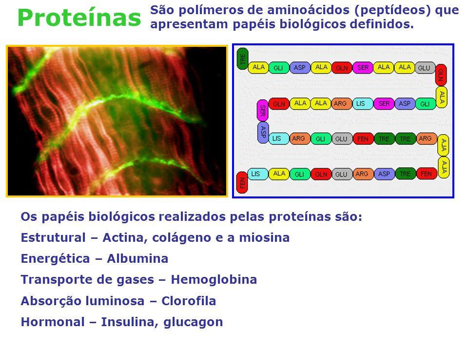 Proteínas São polímeros de aminoácidos (peptídeos) que