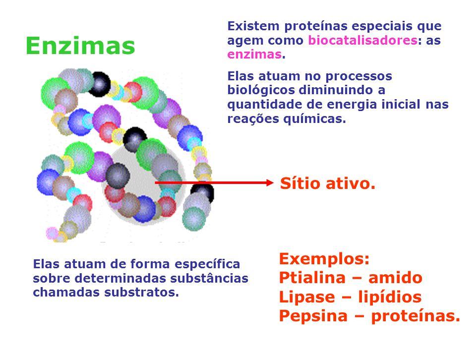 Enzimas Sítio ativo. Exemplos: Ptialina – amido Lipase – lipídios