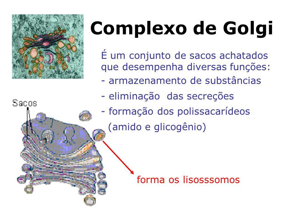 Complexo de Golgi É um conjunto de sacos achatados que desempenha diversas funções: - armazenamento de substâncias.
