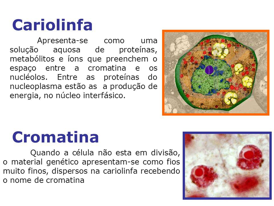 Cariolinfa
