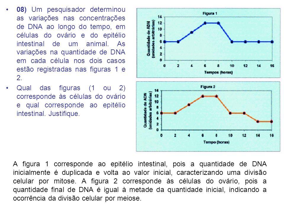 08) Um pesquisador determinou as variações nas concentrações de DNA ao longo do tempo, em células do ovário e do epitélio intestinal de um animal. As variações na quantidade de DNA em cada célula nos dois casos estão registradas nas figuras 1 e 2.