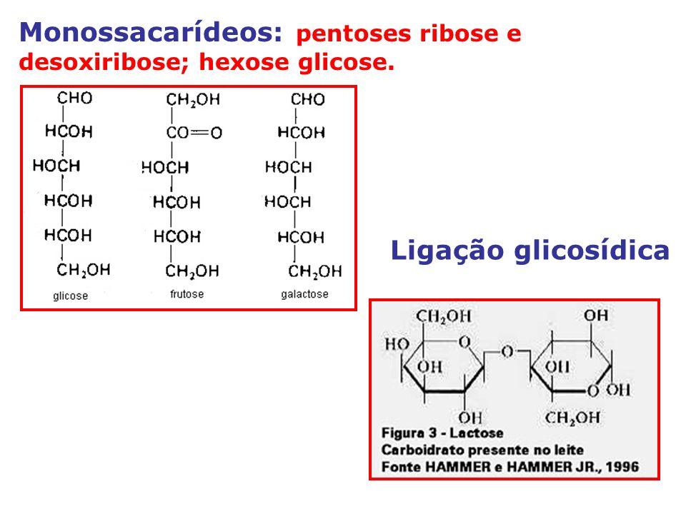 Monossacarídeos: pentoses ribose e desoxiribose; hexose glicose.