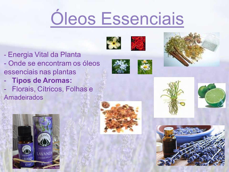 Óleos Essenciais - Onde se encontram os óleos essenciais nas plantas