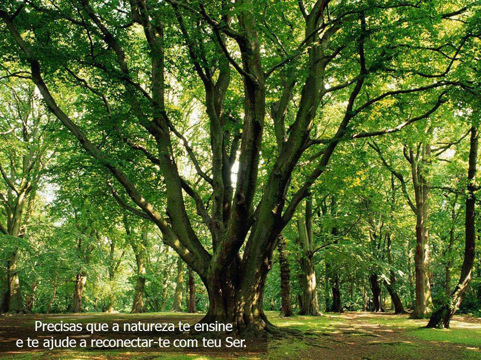 Precisas que a natureza te ensine