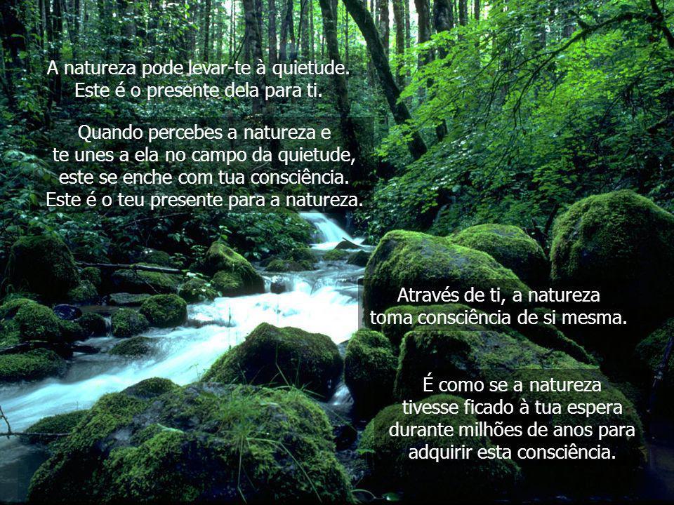 A natureza pode levar-te à quietude. Este é o presente dela para ti.
