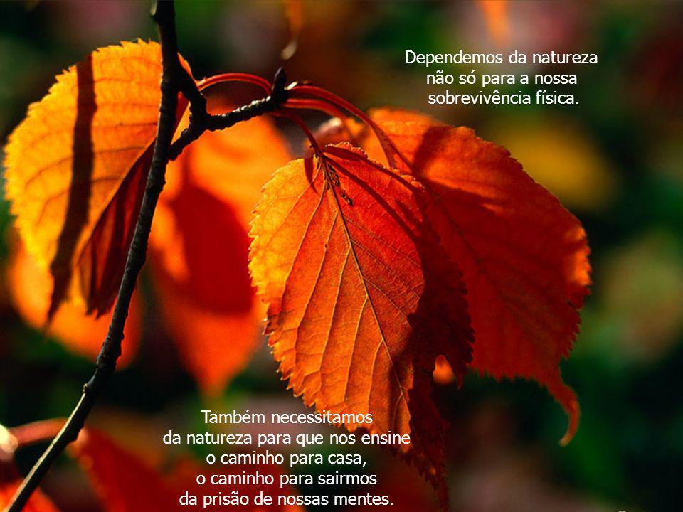Dependemos da natureza não só para a nossa sobrevivência física.