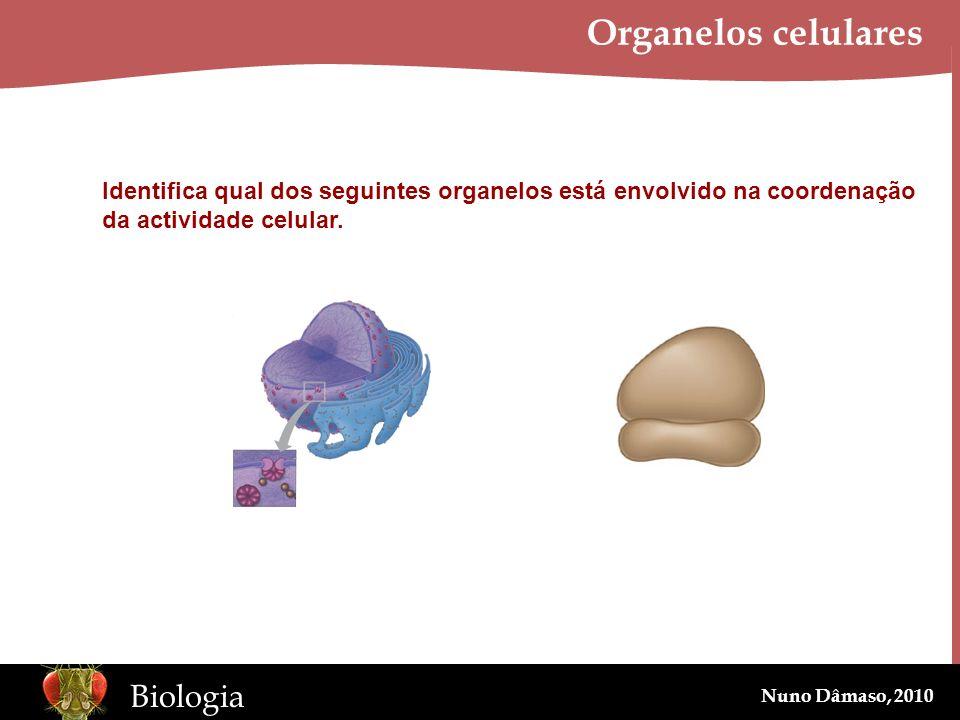 Organelos celulares Identifica qual dos seguintes organelos está envolvido na coordenação.