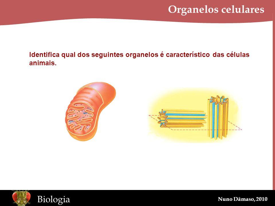 Organelos celulares Identifica qual dos seguintes organelos é característico das células animais.