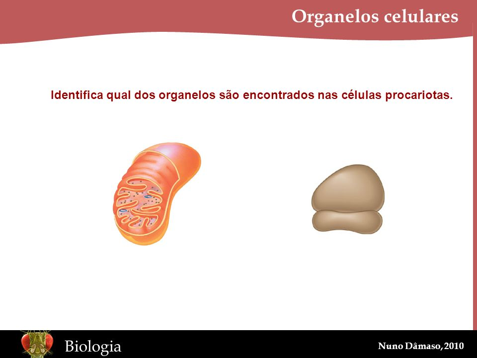 Organelos celulares Identifica qual dos organelos são encontrados nas células procariotas.