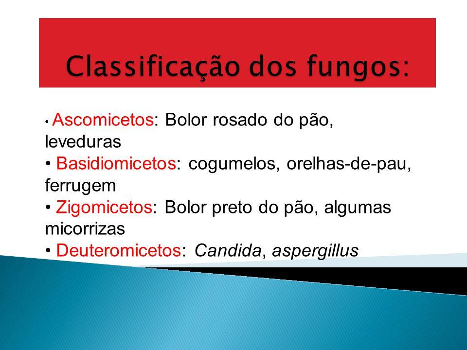 Classificação dos fungos: