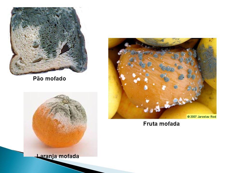 Pão mofado Fruta mofada Laranja mofada