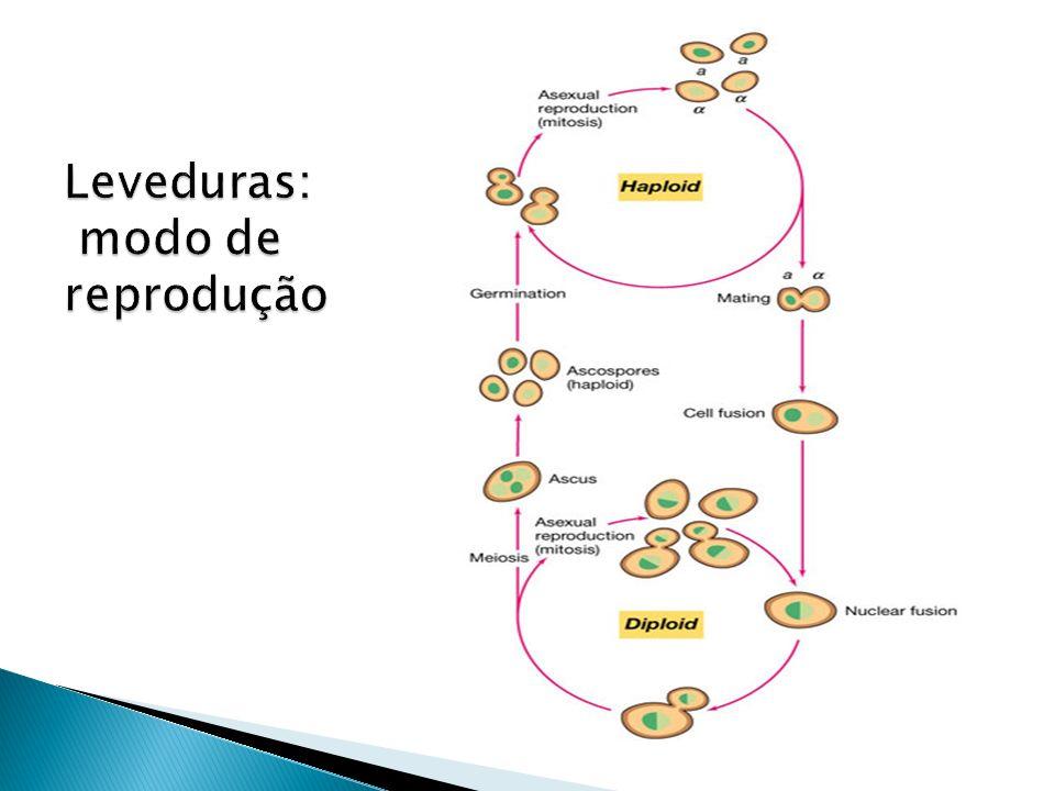 Leveduras: modo de reprodução