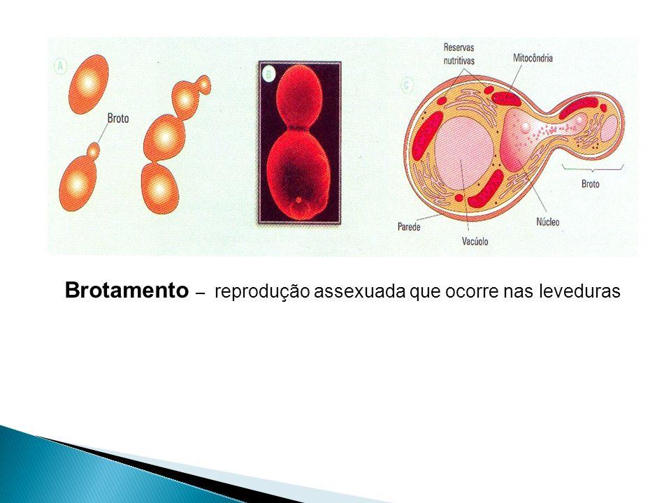 Brotamento – reprodução assexuada que ocorre nas leveduras