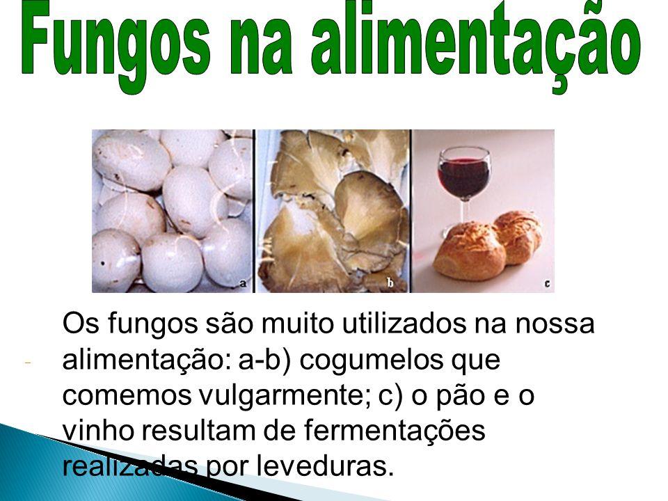 Fungos na alimentação