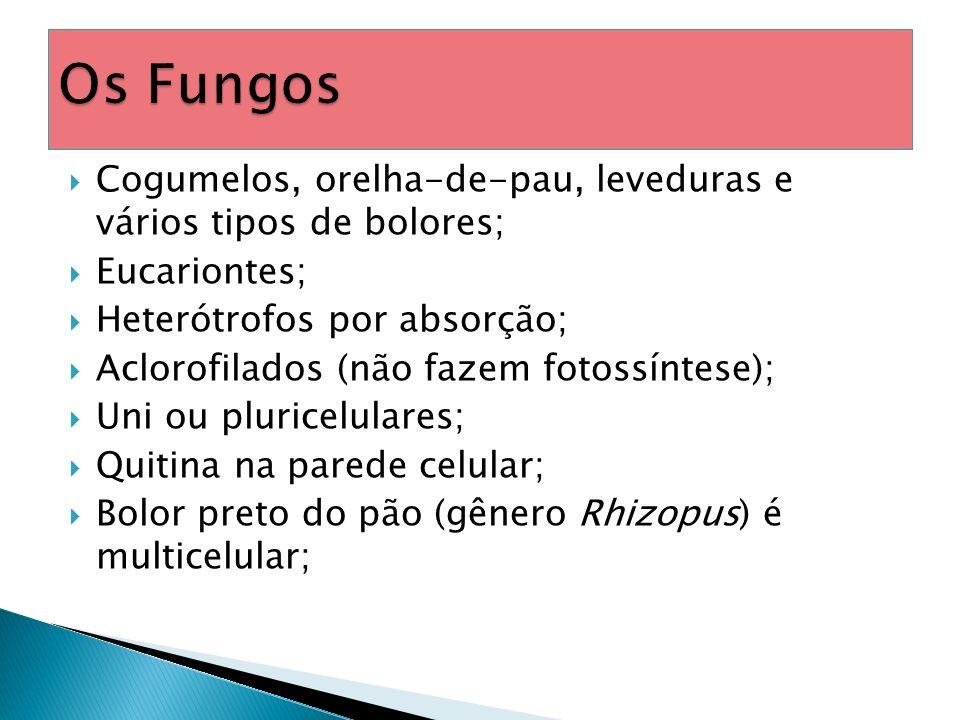 Os Fungos Cogumelos, orelha-de-pau, leveduras e vários tipos de bolores; Eucariontes; Heterótrofos por absorção;