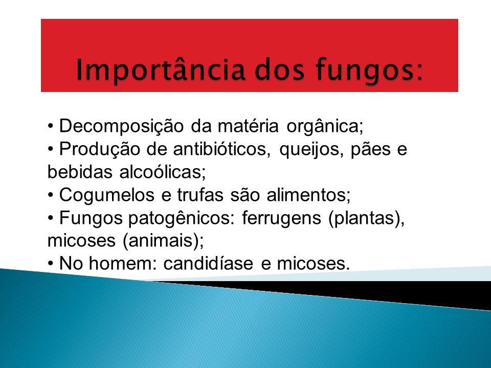 Importância dos fungos: