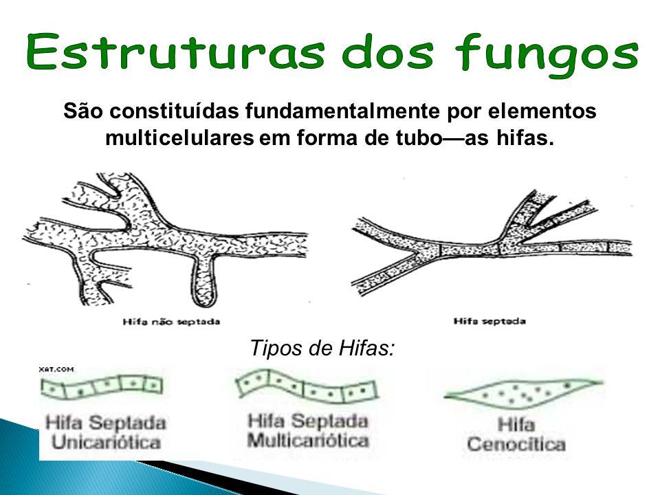 Estruturas dos fungos São constituídas fundamentalmente por elementos multicelulares em forma de tubo—as hifas.