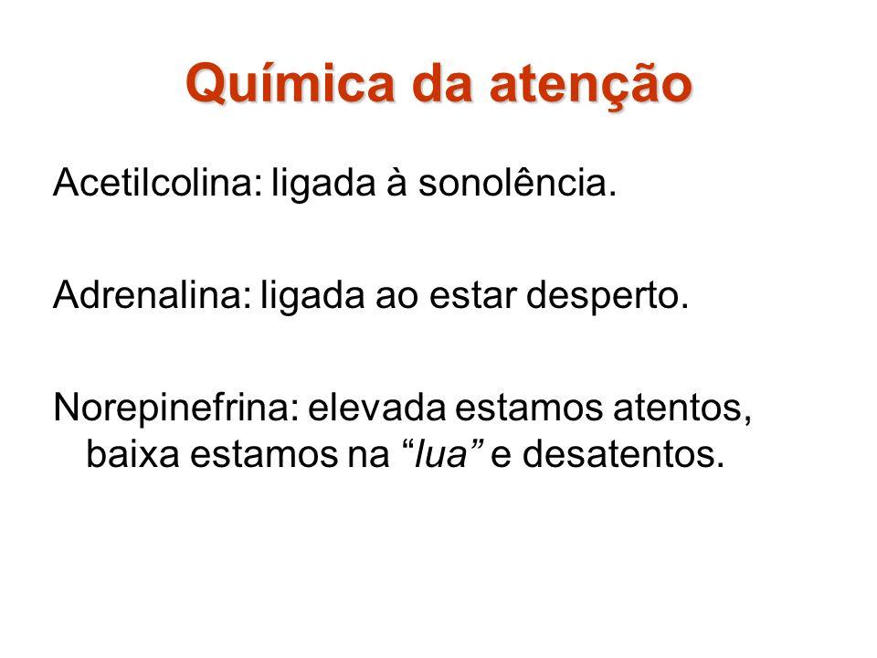 Química da atenção Acetilcolina: ligada à sonolência.