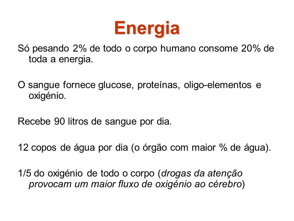 Energia Só pesando 2% de todo o corpo humano consome 20% de toda a energia. O sangue fornece glucose, proteínas, oligo-elementos e oxigénio.