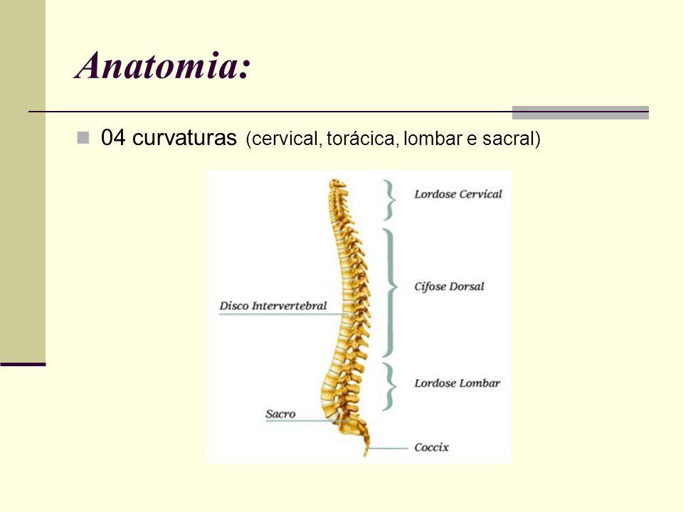 Anatomia: 04 curvaturas (cervical, torácica, lombar e sacral)
