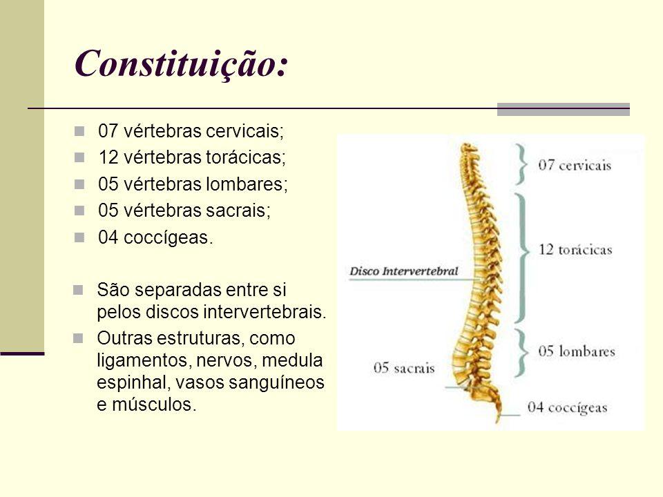 Constituição: 07 vértebras cervicais; 12 vértebras torácicas;