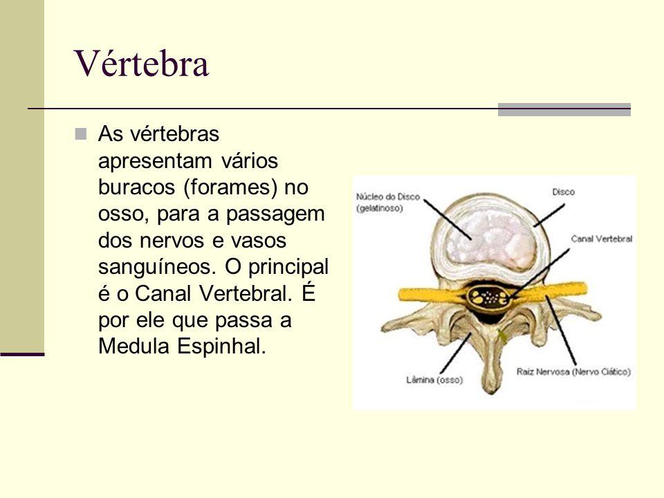 Vértebra