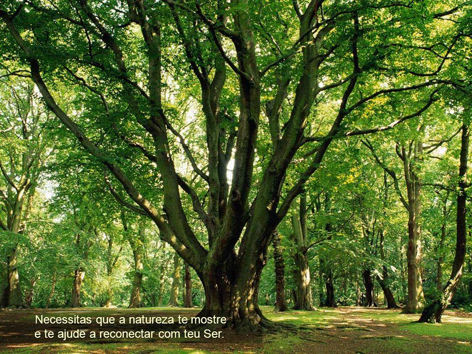 Necessitas que a natureza te mostre
