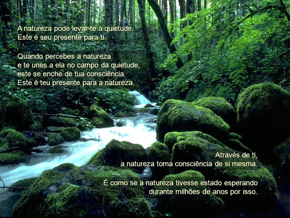 A natureza pode levar-te à quietude.