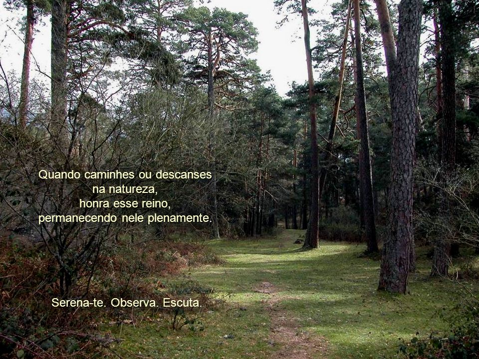 Quando caminhes ou descanses na natureza, honra esse reino,