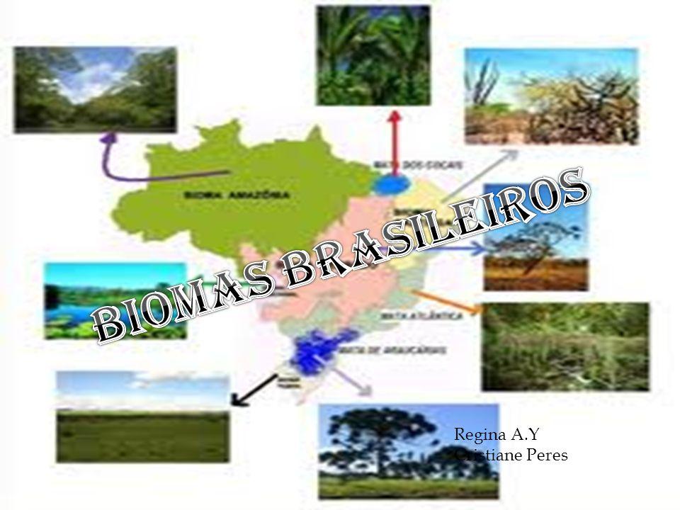 BIOMAS BRASILEIROS Regina A.Y Cristiane Peres