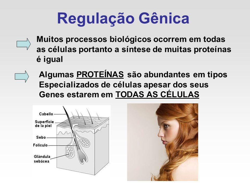 Regulação Gênica Muitos processos biológicos ocorrem em todas