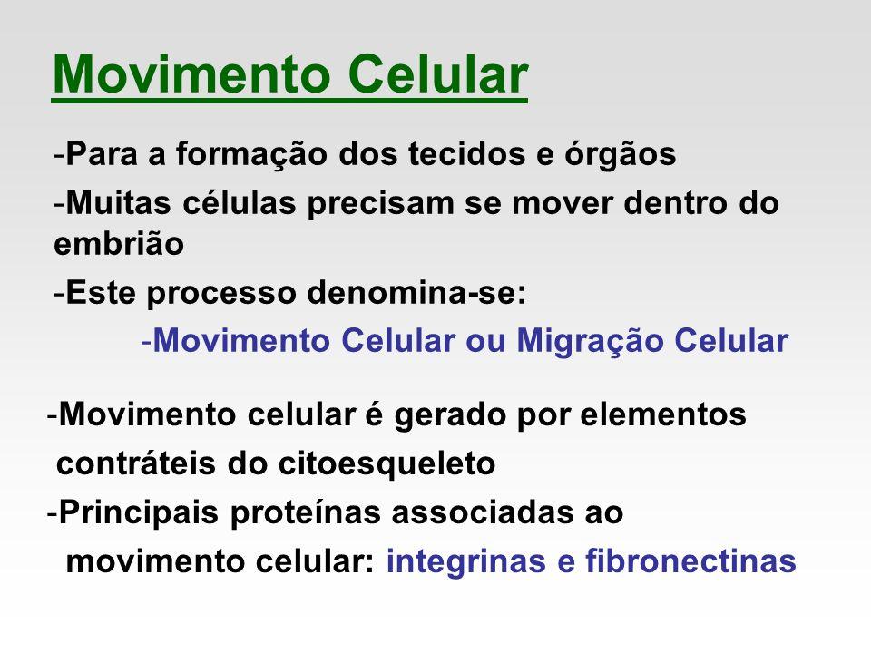 Movimento Celular Para a formação dos tecidos e órgãos