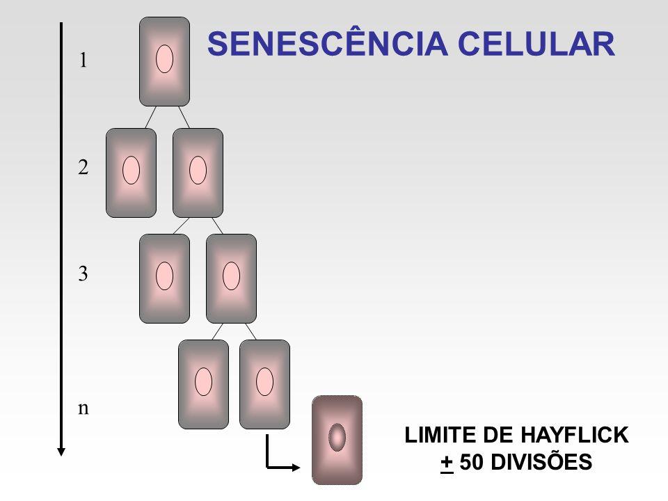 SENESCÊNCIA CELULAR 1 2 3 n LIMITE DE HAYFLICK + 50 DIVISÕES