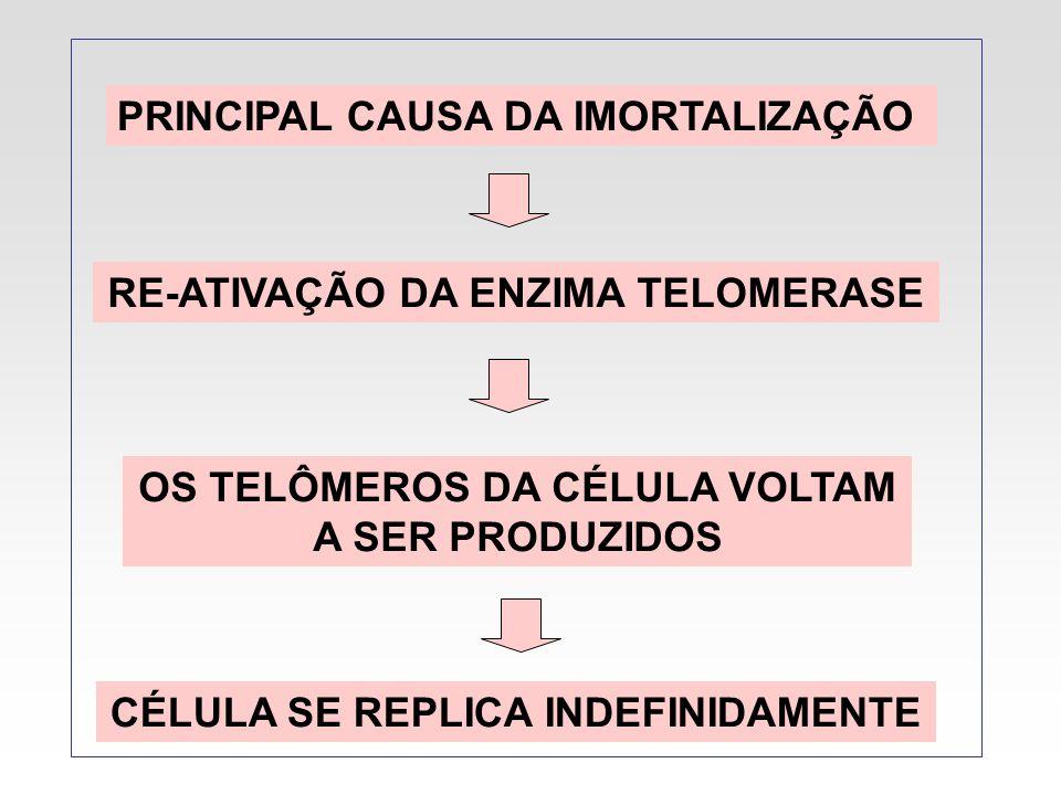 PRINCIPAL CAUSA DA IMORTALIZAÇÃO