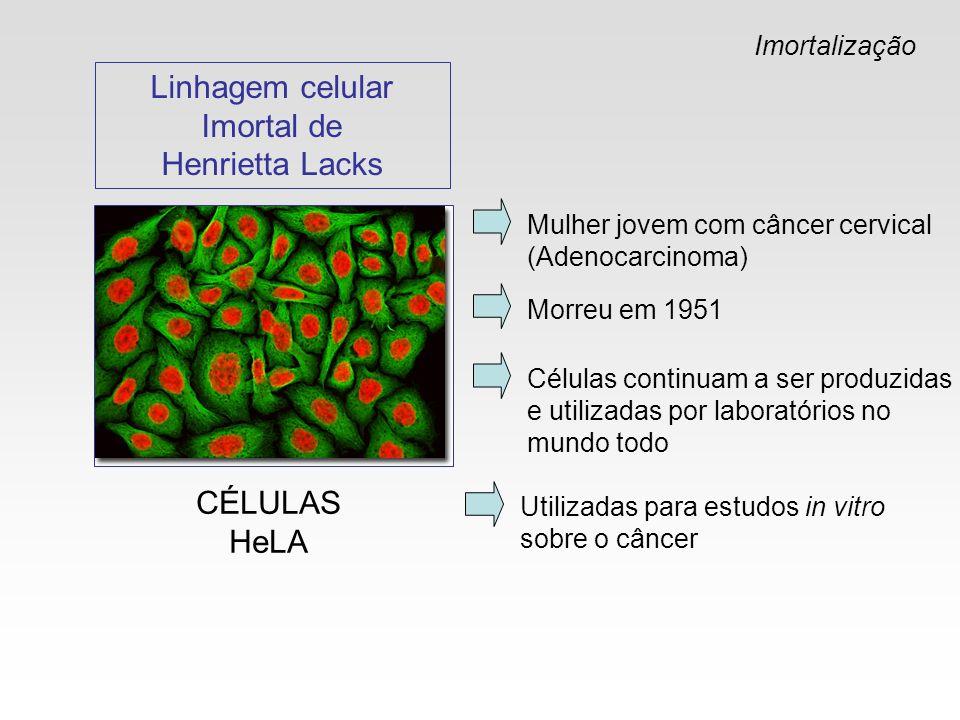 Linhagem celular Imortal de Henrietta Lacks CÉLULAS HeLA Imortalização