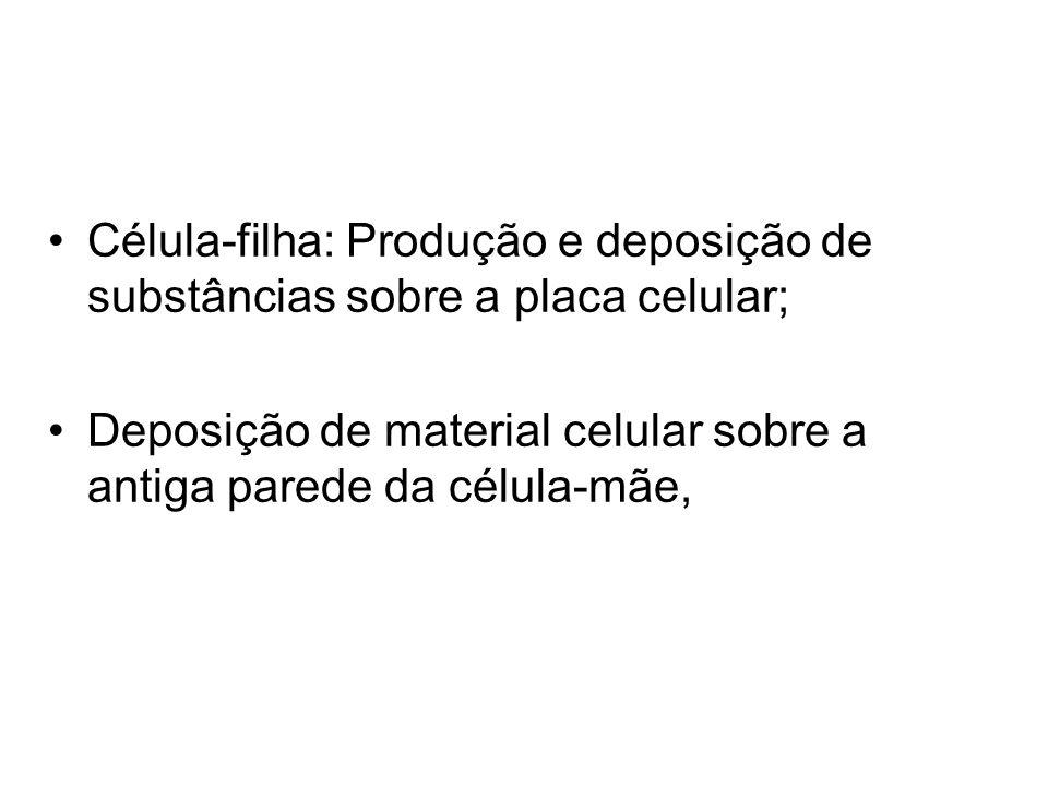 Célula-filha: Produção e deposição de substâncias sobre a placa celular;