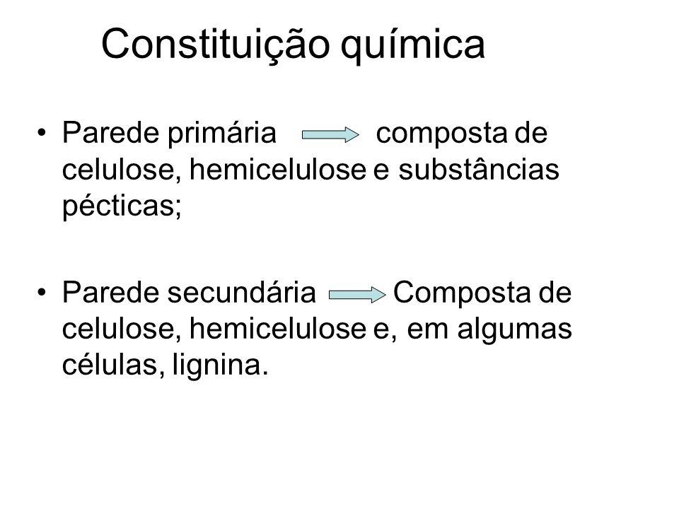Constituição química Parede primária composta de celulose, hemicelulose e substâncias pécticas;