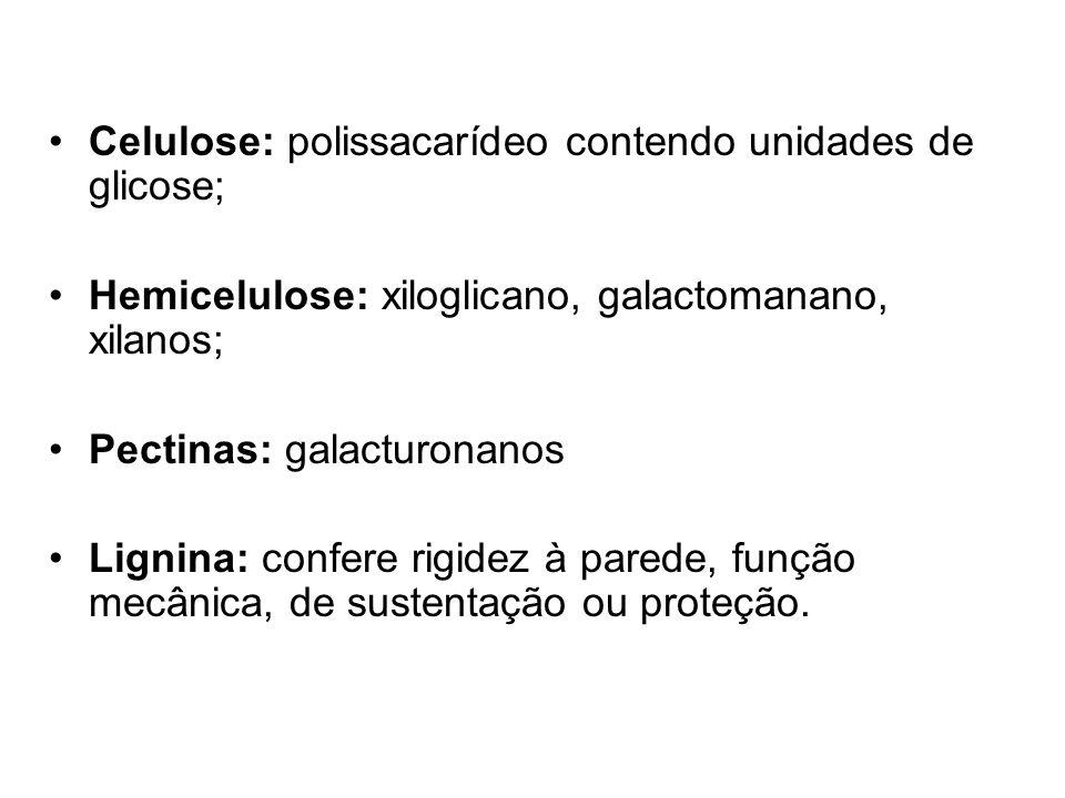 Celulose: polissacarídeo contendo unidades de glicose;