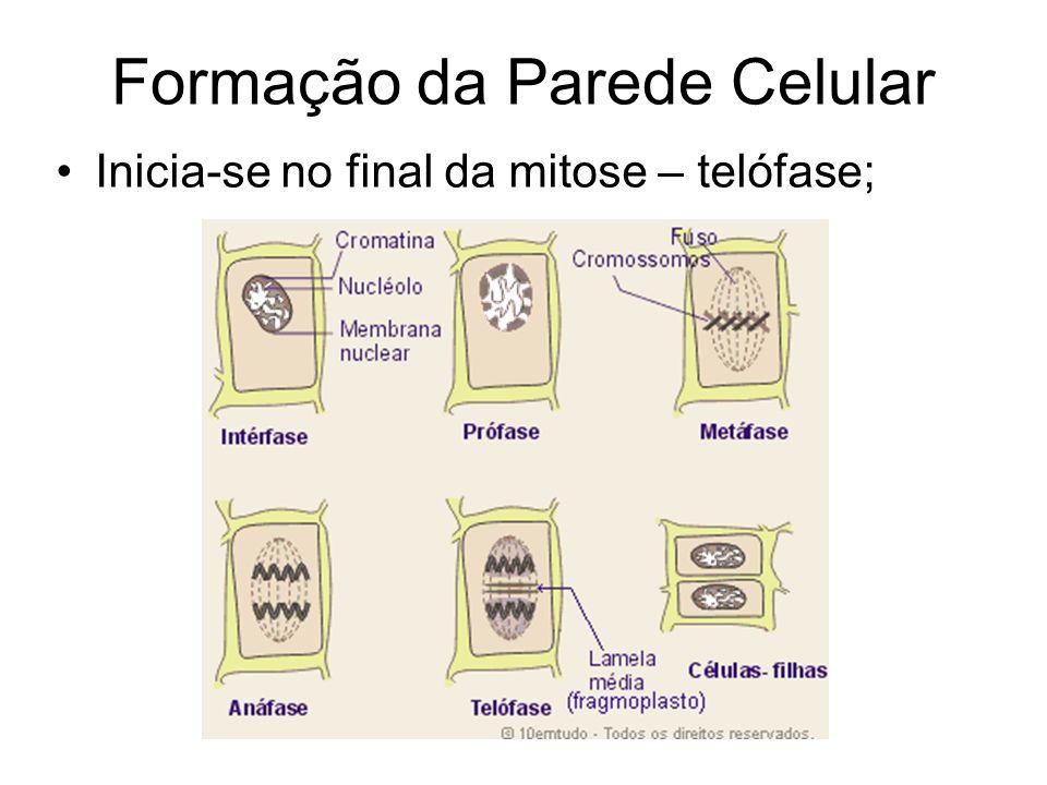 Formação da Parede Celular