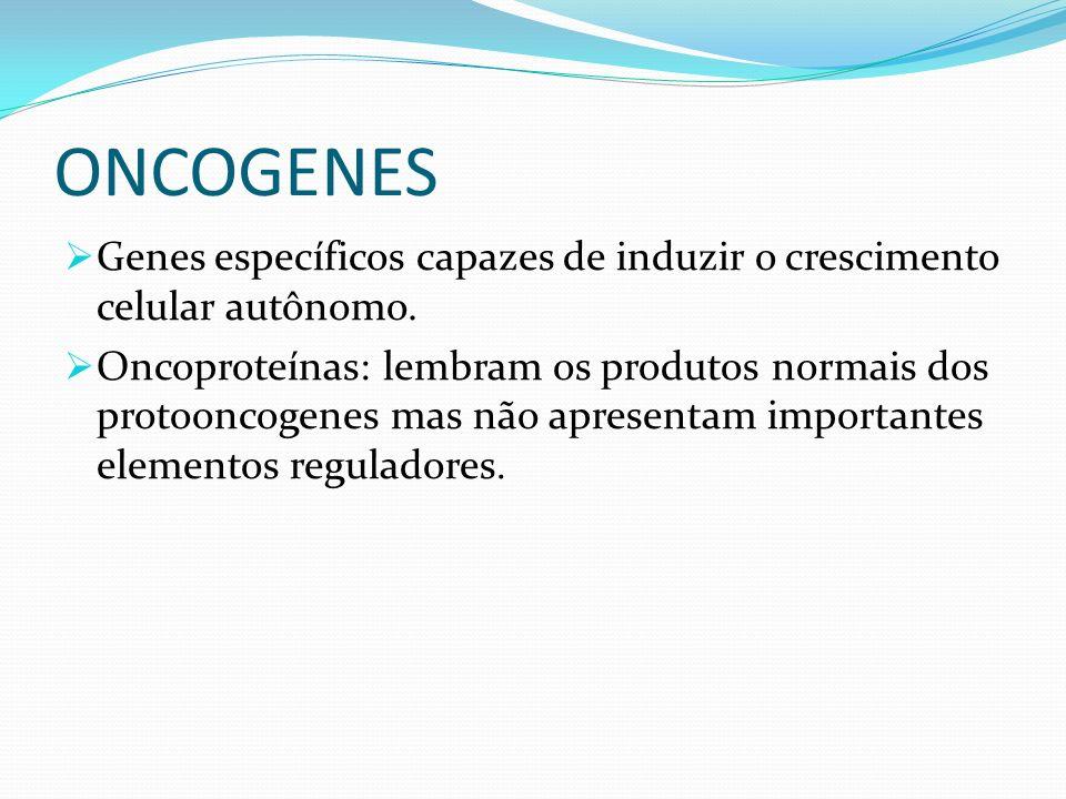 ONCOGENES Genes específicos capazes de induzir o crescimento celular autônomo.