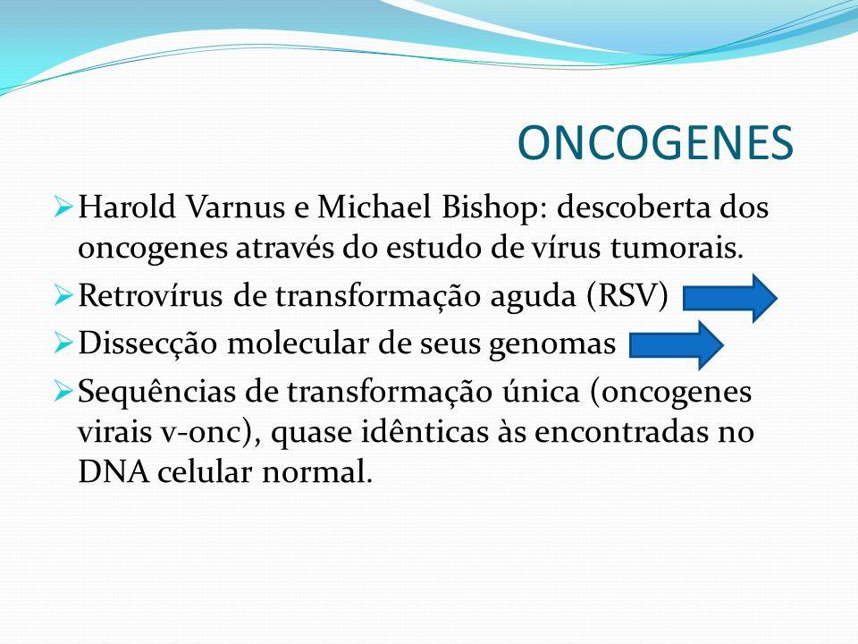 ONCOGENES Harold Varnus e Michael Bishop: descoberta dos oncogenes através do estudo de vírus tumorais.