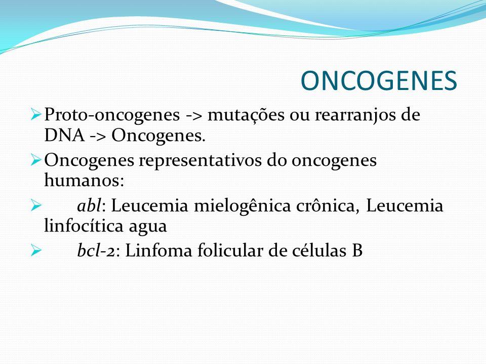 ONCOGENES Proto-oncogenes -> mutações ou rearranjos de DNA -> Oncogenes. Oncogenes representativos do oncogenes humanos: