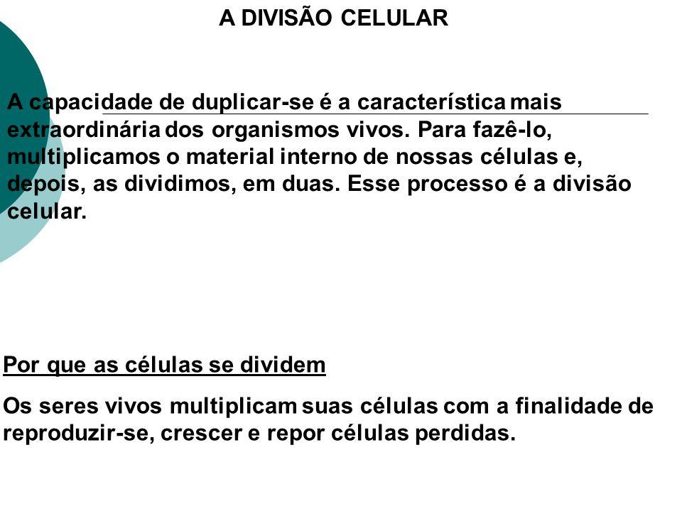 A DIVISÃO CELULAR
